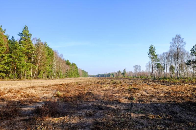 Waldbrandschutzstreifen